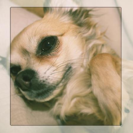 seelenhund
