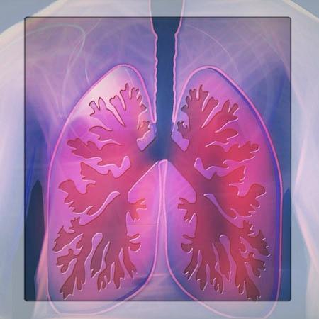 Organsprache Lunge und Bronchien